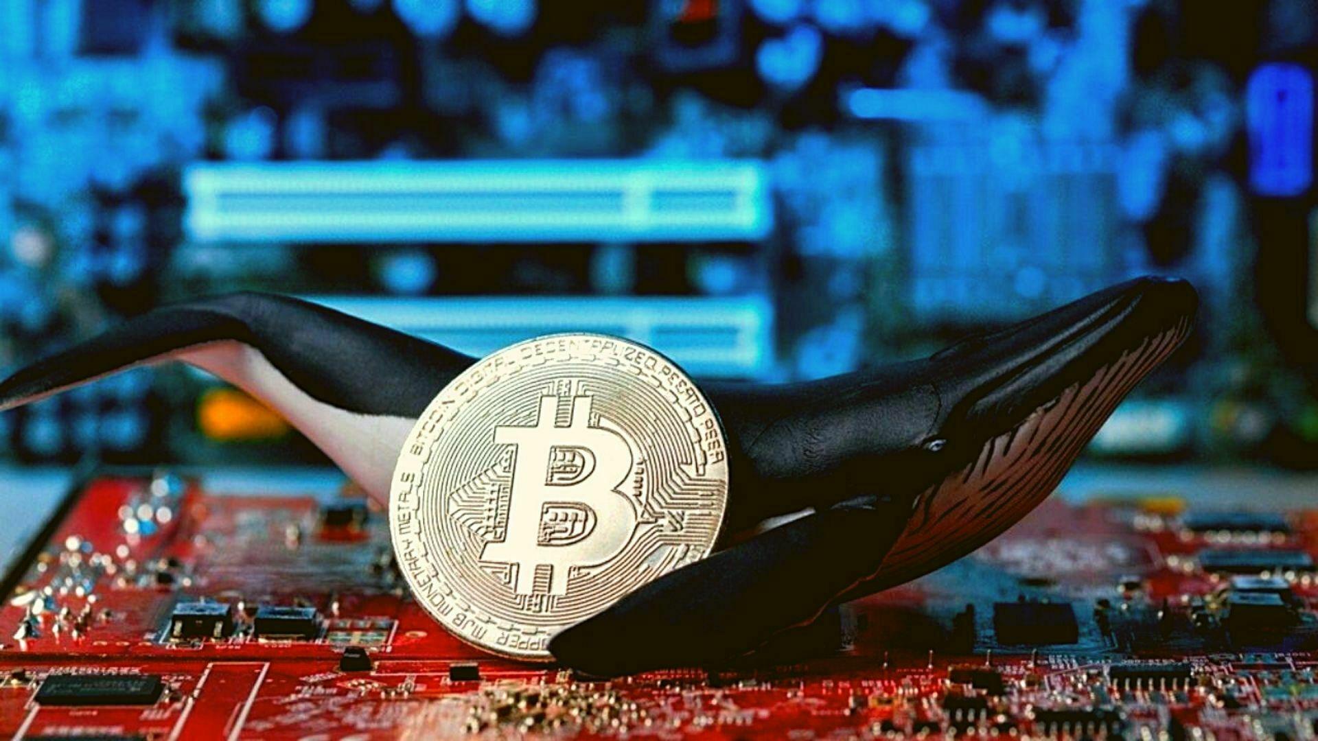 Bitcoin Balinaları Pastanın Büyük Bölümünü Ele Geçiriyor