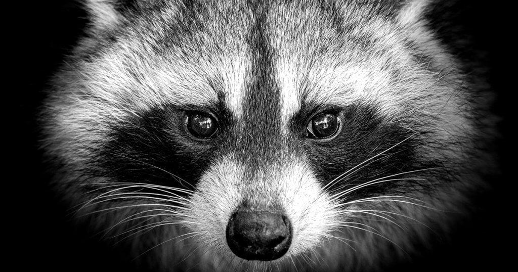 Raccoon Stealer